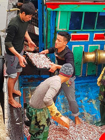 Ngư dân thay nhau vận chuyển đưa cá lên xe đông lạnh. Ảnh: Đ.H