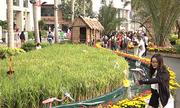 Đường hoa khung cảnh làng quê ở phố nhà giàu Phú Mỹ Hưng