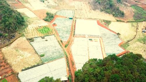 Trang trại dâu tây Chimi từ trên cao