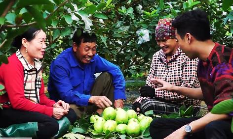 Nông dân đổi đời, xây nhà tầng nhờ trồng ổi