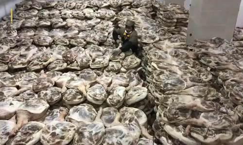 Nhà máy chế biến đùi lợn ướp muối vào vụ Tết ở Trung Quốc