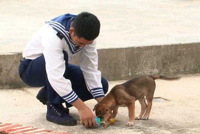 Những chú chó ở Trường Sa