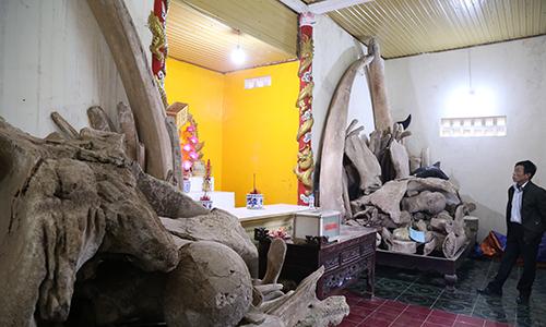 Làng biển Quảng Bình thờ hai bộ xương cá voi dài 26 mét