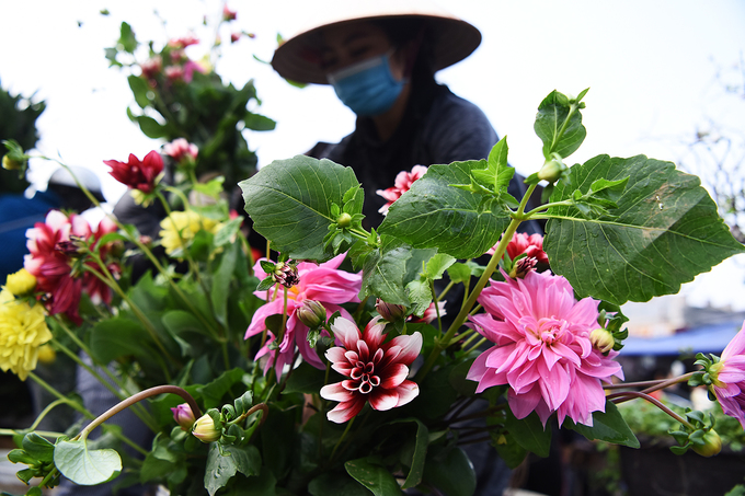 Chợ hoa lớn nhất nội thành Hà Nội tấp nập ngày đêm