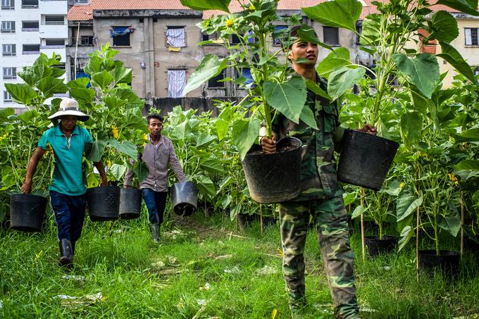 Cuộc sống của những người chăm sóc hoa thuê dịp Tết ở Sài Gòn