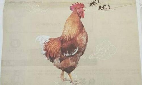 Malaysia xin lỗi vì đăng ảnh gà trong quảng cáo mừng năm Mậu Tuất