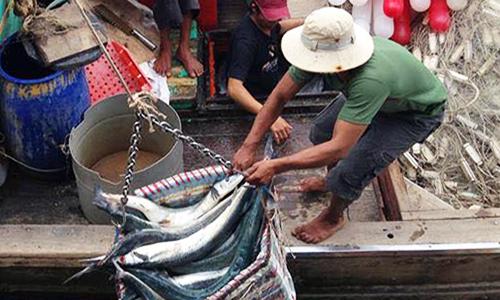 Ngư dân miền Tây trúng đậm mẻ cá đầu năm