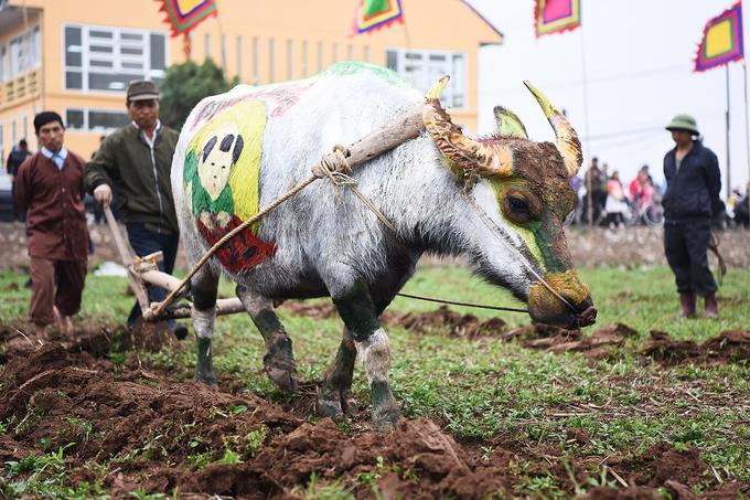 Tái hiện vua đi cày trong lễ hội Tịch điền