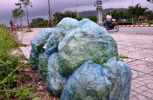 Những túi mồng tơi không bán được bị vứt bỏ bên bờ sông Trà Khúc. Ảnh: Phạm Linh.