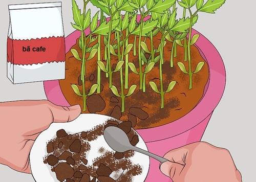 Phần bã sau khi pha cafe có thể trở thành nguồn cung cấp dinh dưỡng hữu ích cho đất.