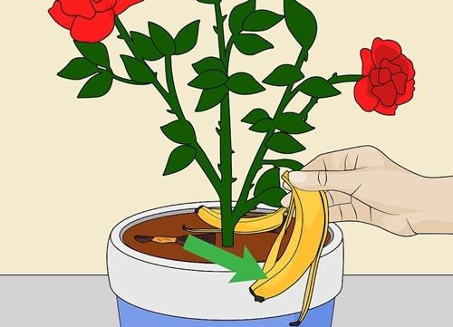 Vỏ chuối sẽ cung cấp dưỡng chất cần thiết cho đất.