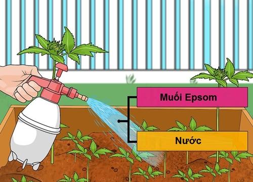 Muối Epsom giúp cây phát triển nhanh hơn.