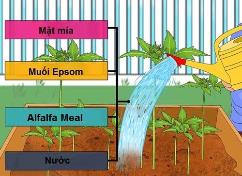 Hỗn hợp cung cấp chất dinh dưỡng cho cây từ mật mía.