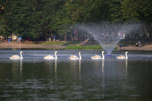Sau một năm sử dụng chế phẩm đặc biệt để giải cứu các hồ ô nhiễm ở Hà Nội, đến nay phần lớn các hồ đã hết mùi hôi tanh và màu nước sạch hơn. Ảnh: Ngọc Thành