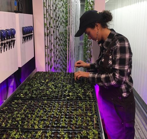 Electra Javis đang chăm sóc cho các cây rau.