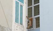 Khỉ hoang quấy phá khu dân cư trung tâm Hà Nội