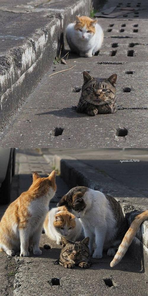 Một con mèo đau, cả bầy đứng ngó.