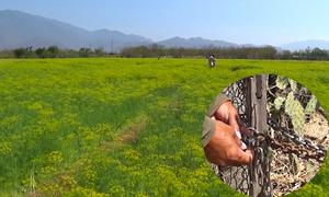 Chủ vườn thì là khóa cổng vì khách giẫm đạp hoa