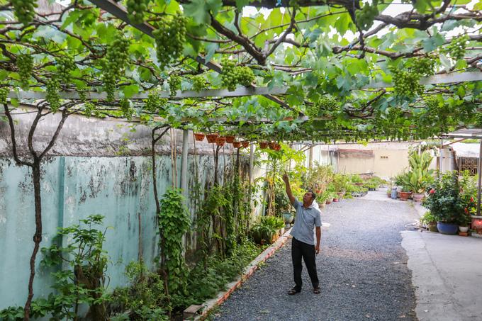 Vườn nho trĩu quả thu 200 triệu mỗi năm ở Sài Gòn