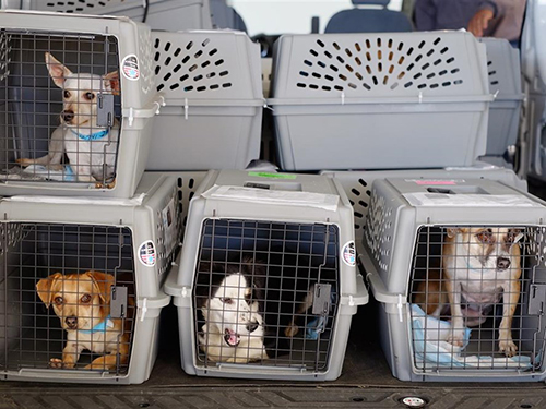 Chú chó chết trong khoang đựng hành lý trên máy bay Mỹ - ảnh 1