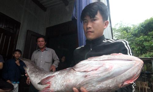 Ngư dân thả câu bắt được cá hơn 10 kg nghi sủ vàng quý hiếm