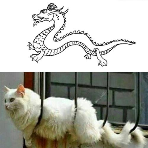 Mèo có họ hàng với loài rồng.