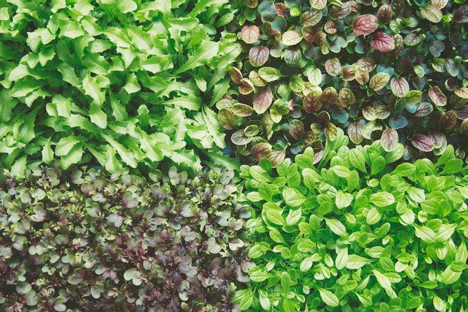 Mô hình nông trại trong nhà trồng rau siêu nhanh của Ikea