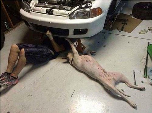 Thợ sửa xe chuyên nghiệp.