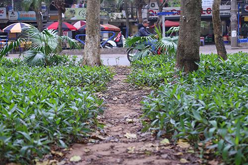 Vườn hoa ở Hà Nội được cắm chông để tránh bị giẫm đạp