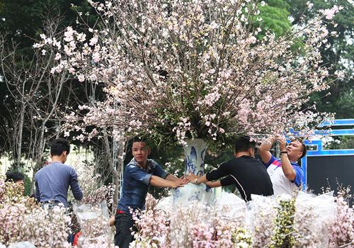 1.000 sinh viên múa Yosakoi trong lễ hội hoa anh đào Hà Nội