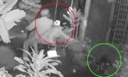 Cẩu tặc kéo lê chủ nhà 10 m để cướp chó Alaska