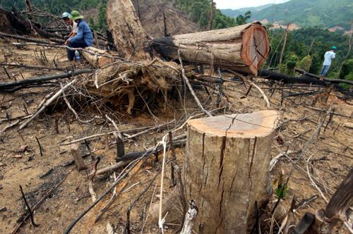 Hạt phó kiểm lâm ở Quảng Nam bị cách chức vì để xảy ra phá rừng