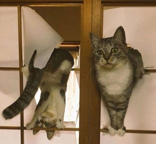 Không gì ngăn được sự phá hoại của mèo.