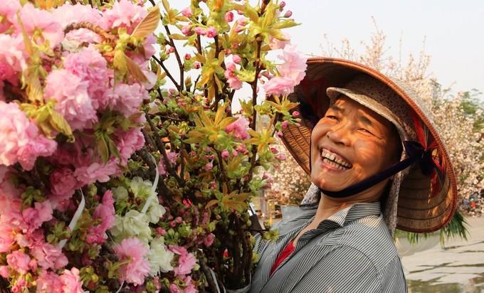 Hoa anh đào Nhật Bản làm say lòng người dân Hải Phòng