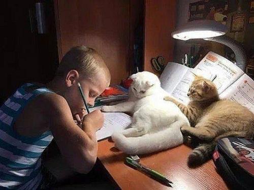 Những giáo viên mèokhó tính.