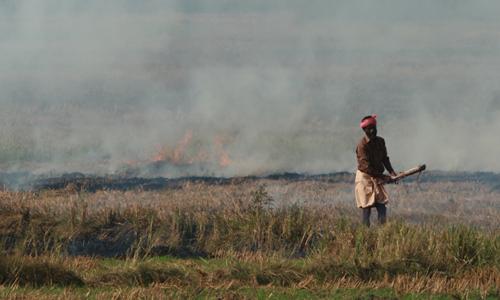 Nhiều nông dân đốt rơm trên ruộng để chuẩn bị cho vụ lúa mì mới. Ảnh: AJP.