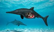 Hóa thạch 180 triệu năm của thằn lằn cá mang thai