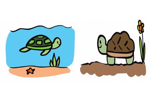 """Phân biệt cách dùng """"turtle"""" và """"tortoise"""" trong tiếng Anh"""