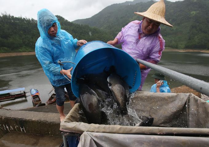 Nông dân nuôi cá lăng trên núi kiếm tiền tỷ mỗi năm