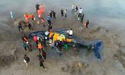 Giải cứu bất thành cá voi 6 tấn mắc cạn ở Argentina