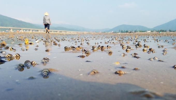 Hơn chục tấn ngao chết trắng đầm ở Hà Tĩnh
