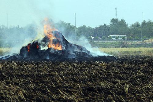 Với bà con nông dân, đrong khi đốt rất nhanh gọn, lúa cắt xong gặp nắng châm lửa thì nó cháy thành tro bón cho ruộng, cỏ dại bị chết hết,