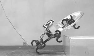 Đại học Mỹ chế tạo robot bắt chước gián