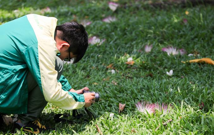 Cây bàng vuông 16 năm tuổi ở Sài Gòn vào mùa nở hoa