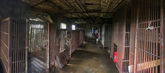 Giải cứu hai con gấu bị nhốt 20 năm tại Ninh Bình