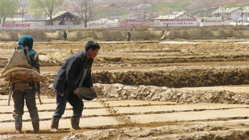 Nông dân Triều Tiên vẫn sản xuất, trồng trọt trong điều kiện vật chất thiếu thốn. Ảnh: BBC.