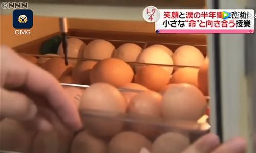 Lớp dạy nuôi gà trước khi giết thịt gây tranh cãi ở Nhật Bản