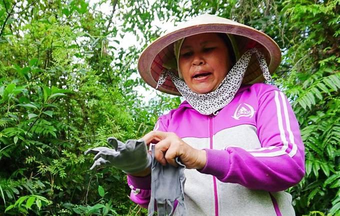 Lội vào đầm lầy hái rau choại ở vùng ven Sài Gòn