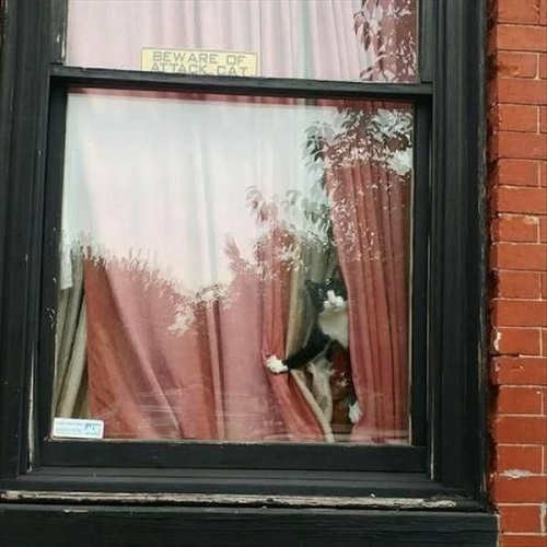 Cẩn thận nhà có mèo dữ.