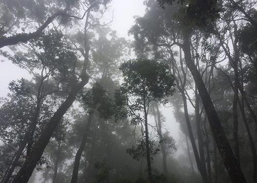 Quần thể cây pơ mu vừa được nhóm nghiên cứu Vườn Quốc gia Vũ Quang phát hiện trong quá trình thực địa. Ảnh:Đ.H